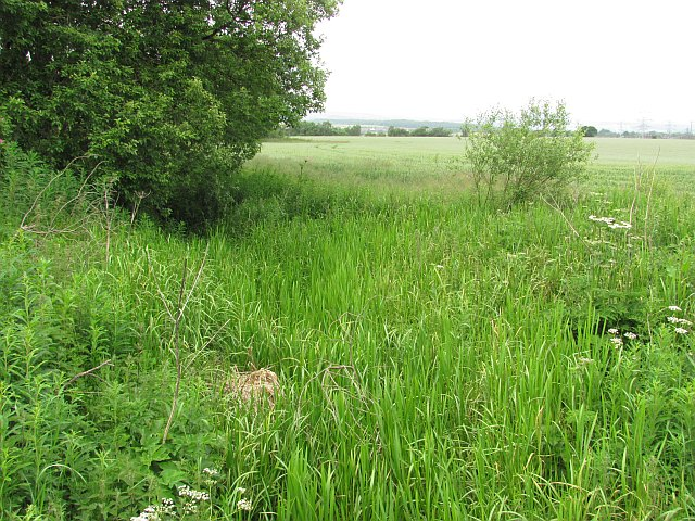 Ditch and its vegetation