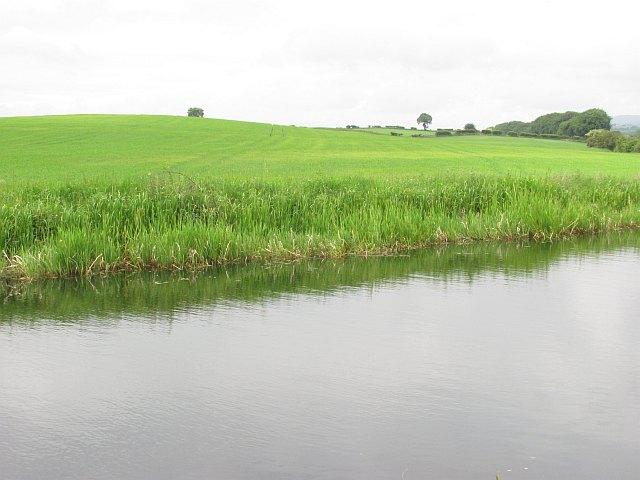 Barley field, Bonnybridge