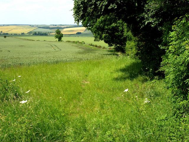 A Wolds' Field
