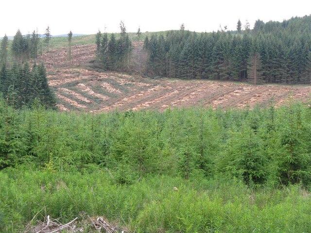 Harvest in Castle O'er Forest