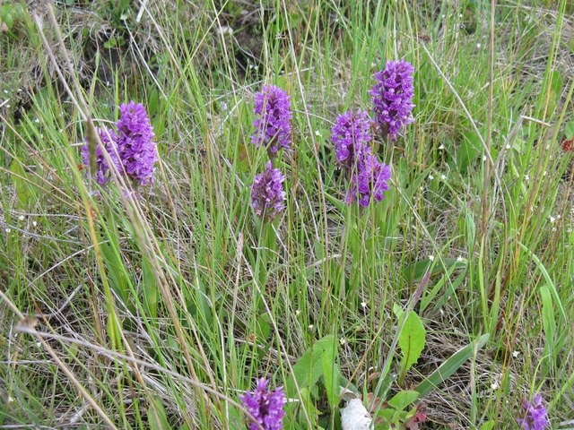 Orchids by the motorway