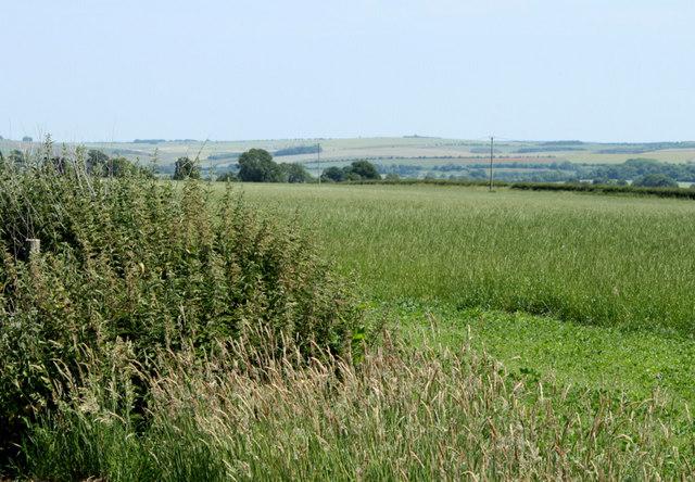 2010 : A strange hedgerow near Hitcombe Bottom
