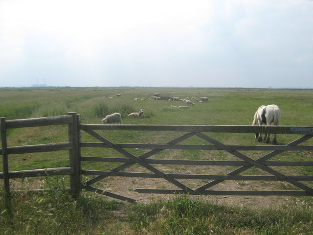 Mixed animal pasture in Cliffe Marshes