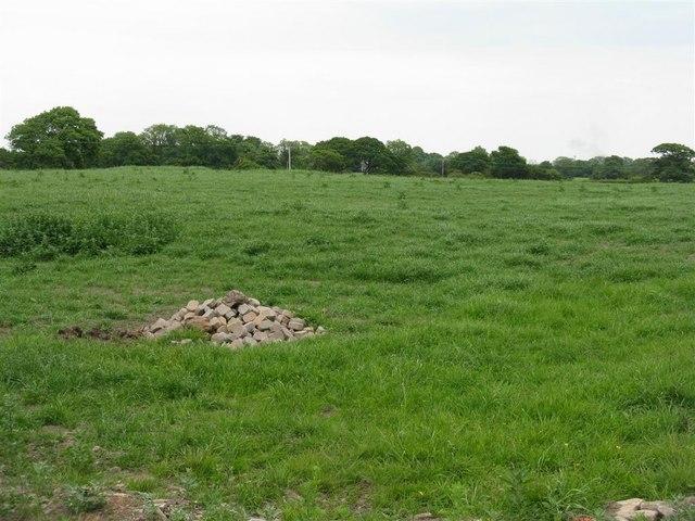 Grass field on Ashley Lane