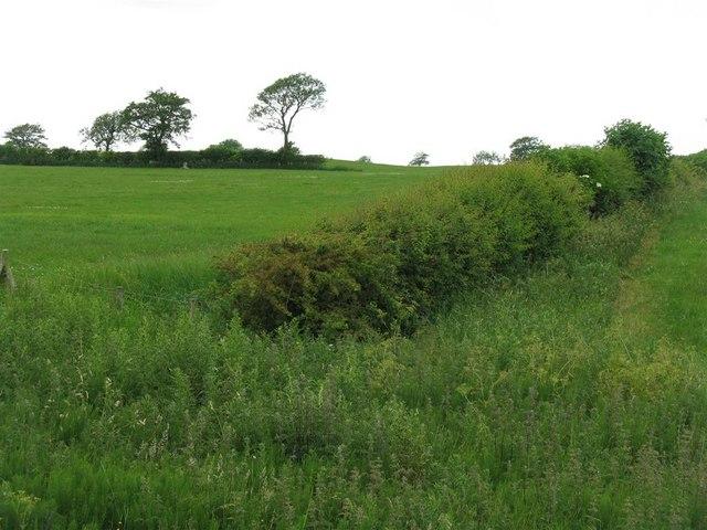 Fields near Ashley Hall