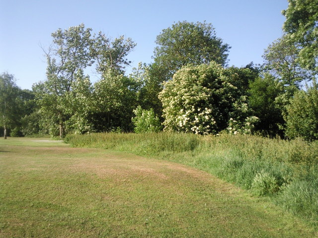 Bursted Wood