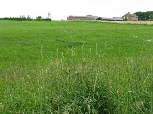 Pasture near Ashley Hall