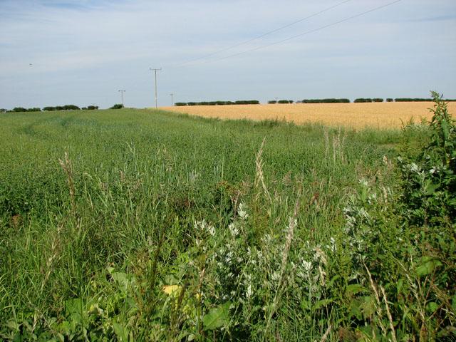 Fields east of Manor Farm, Coxford