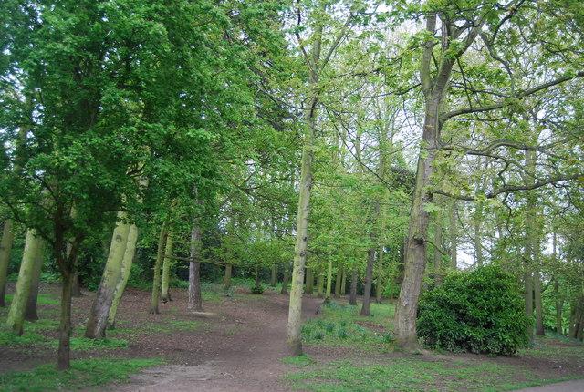 Woodland, Crystal Palace Park