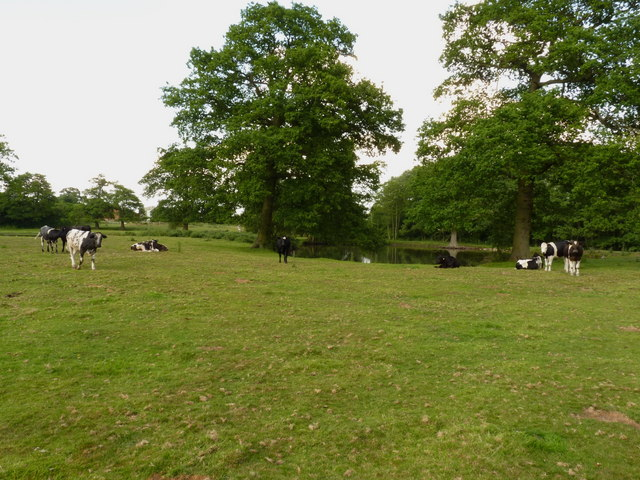 Grazing beside the pool at Blymhill Common