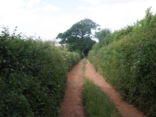 Devonshire Heartland Way, near Posbury