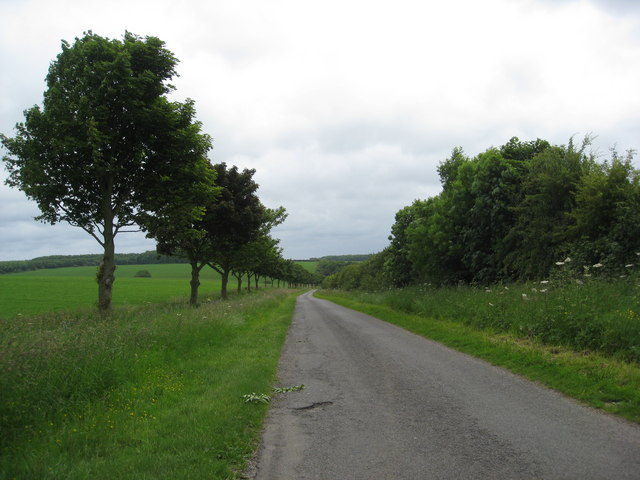 Tree lined road to Skendleby Psalter