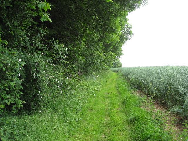 Public footpath alongside Fordington Wood