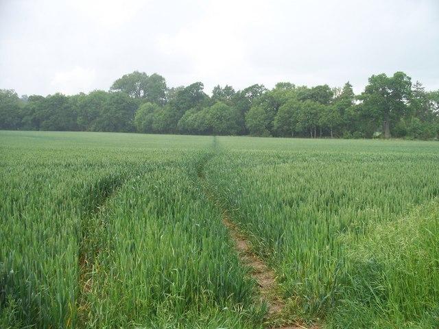 Path through the wheat