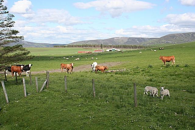 Tomalienan Farm