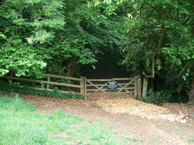 Into Norcombe Wood