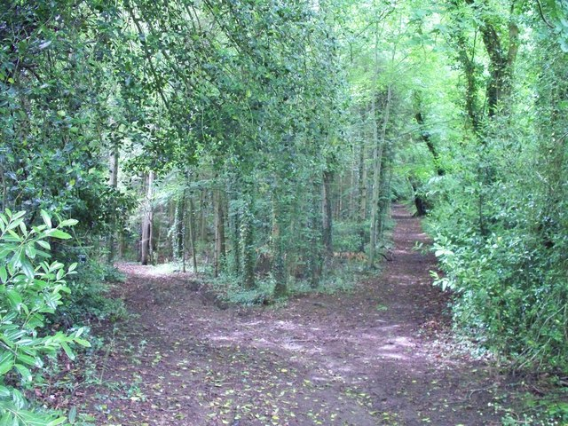In Norcombe Wood [1]