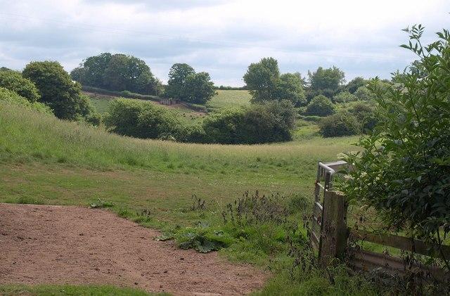 Field at Chitterwell
