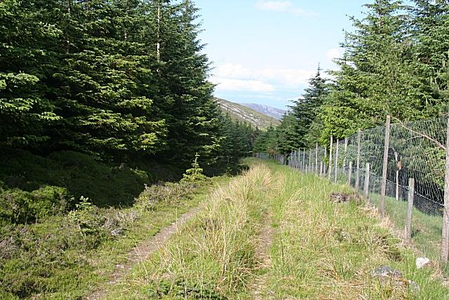 Buiternach Wood