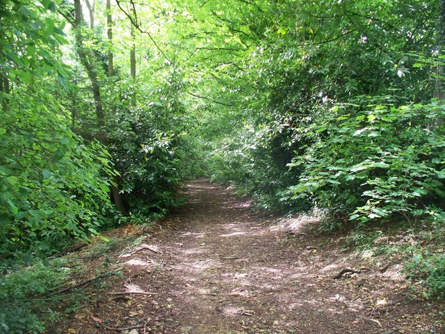 In Norcombe Wood [4]