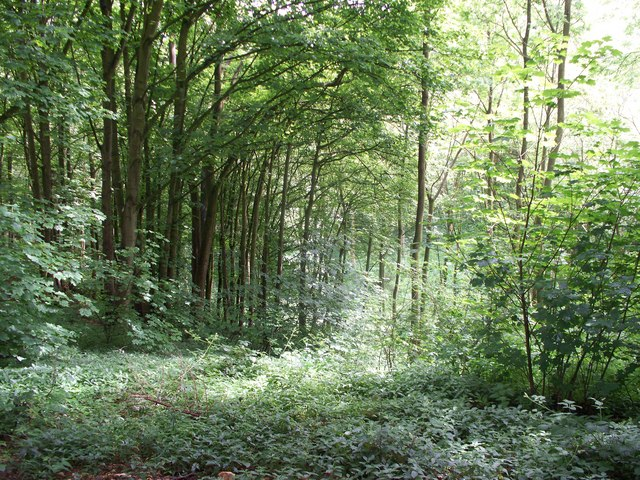 In Norcombe Wood [5]