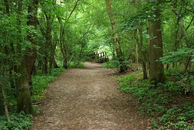 Footpath through Dendy's Wood