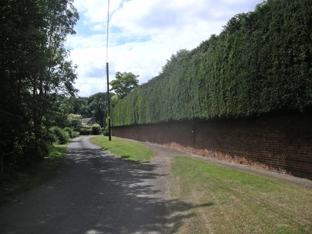 Dodford wall and hedge