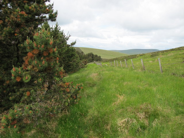Boundary posts - the Kidland Forest