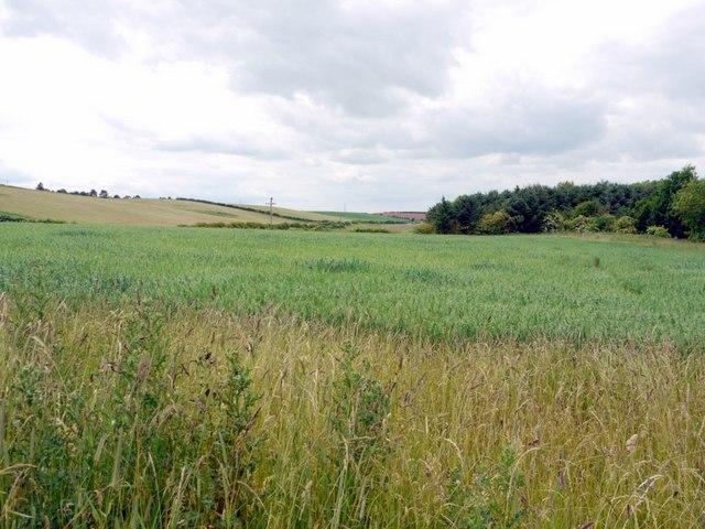 Field north-east of Branxton