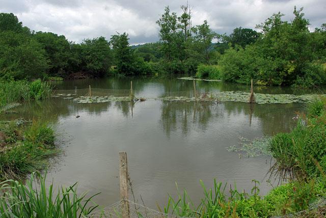 River Mole near Oldpark Wood