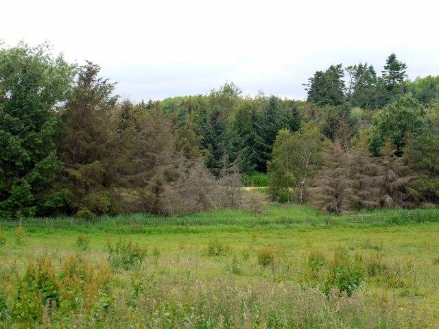 Inch Plantation