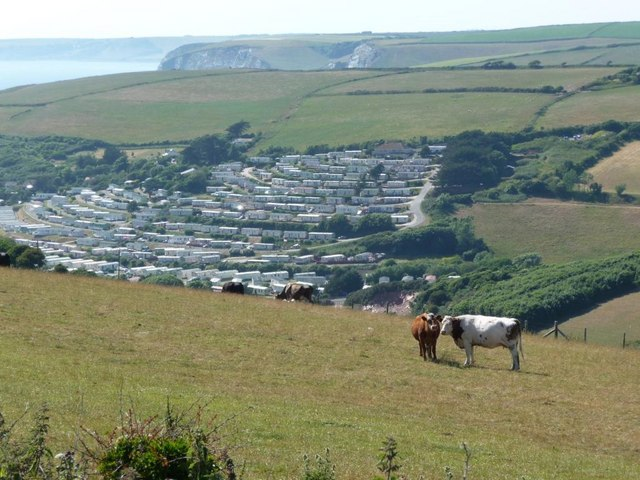 Cows on the hillside above Challaborough