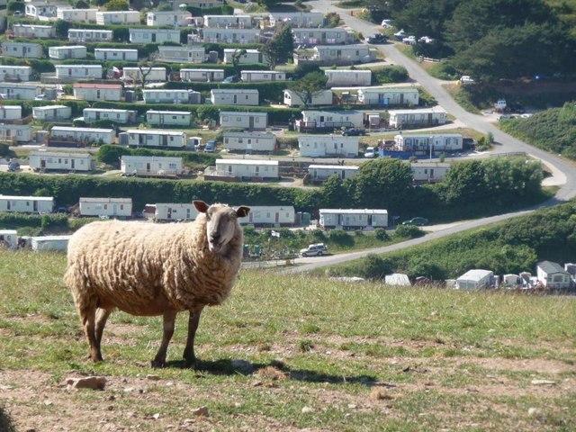 Grazing sheep on hillside