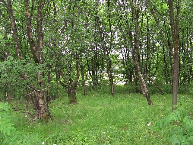 Woodland, Dennyloanhead