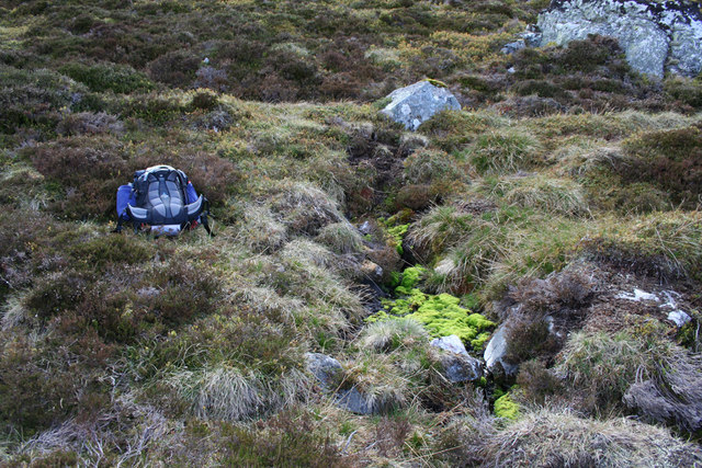 Mossy spring