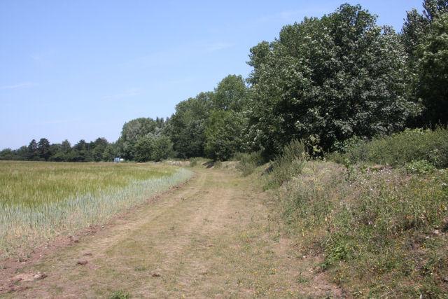 Field margin alongside the A142