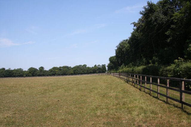 Paddock near Exning