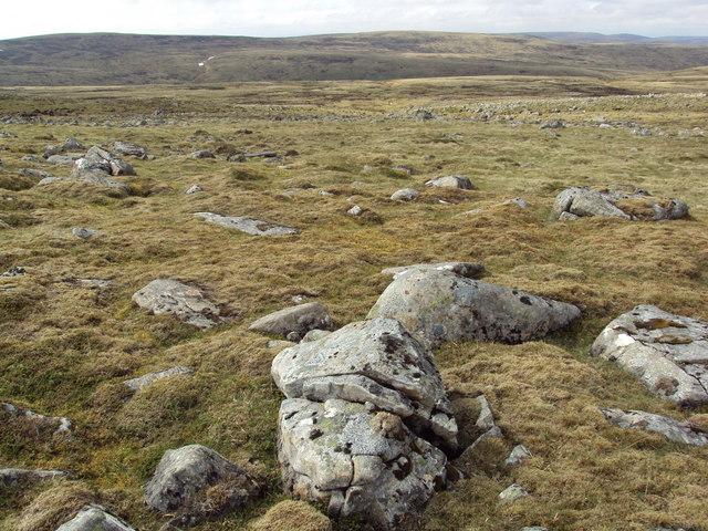 Open moorland with ptarmigan