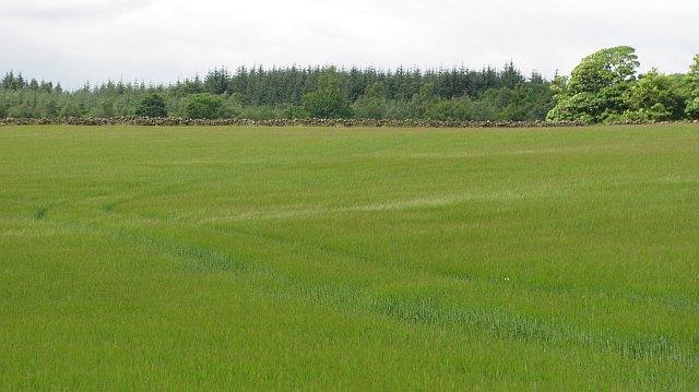 Barley, Torwood
