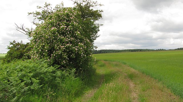 Farm track, Torwood