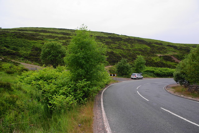 Japanese knotweed by the A640