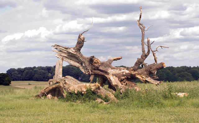 Dead Tree & View of Copse