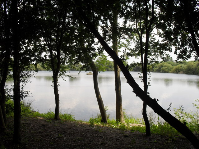 Lake seen through the trees