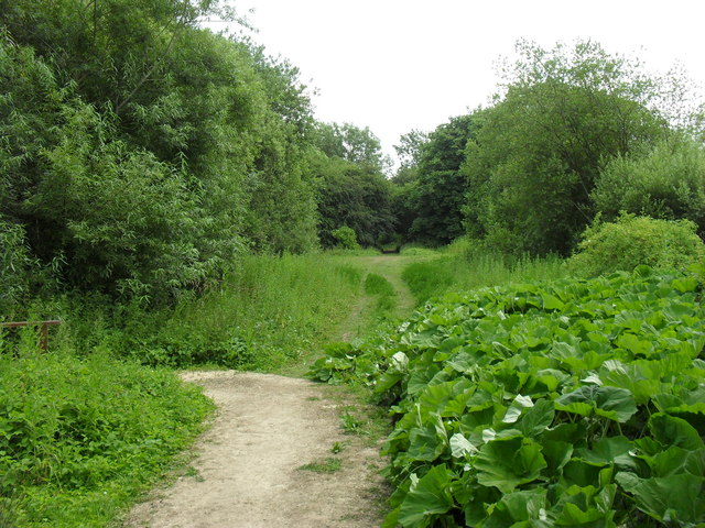 Footpath through Whelford Pools Nature Reserve