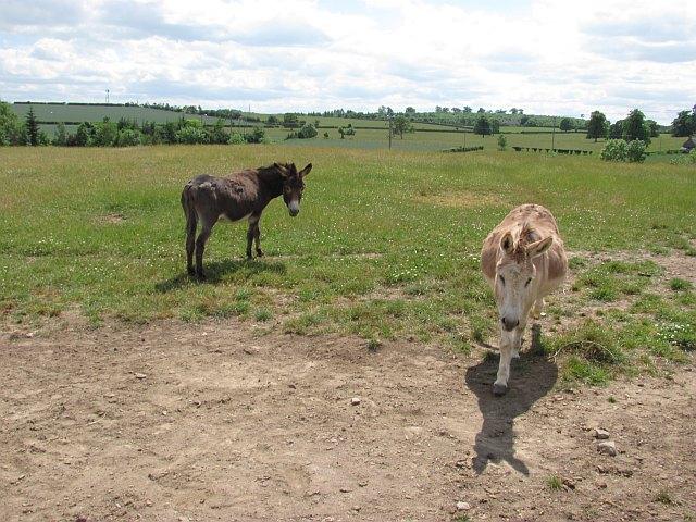 Scottish Borders Donkey Sanctuary
