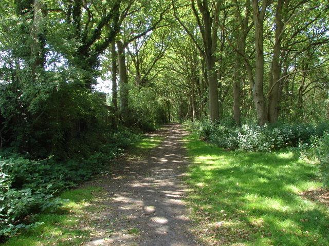 Bisley Common
