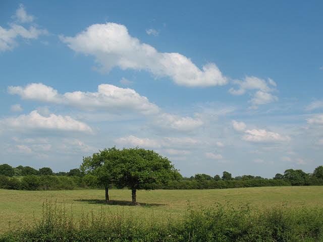 Field with two trees