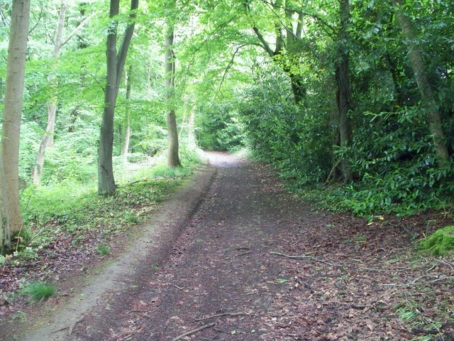 In Norcombe Wood [6]
