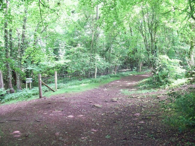 In Norcombe Wood [7]