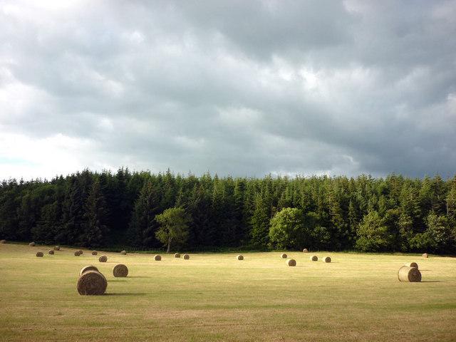 Hay field, Lanercost